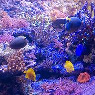Aquarium-verlichting